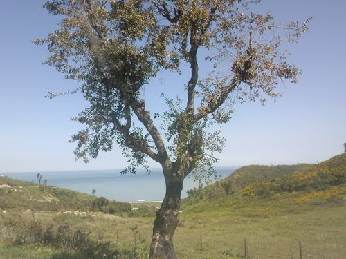Kabylie belle et rebelle  Hauteu10