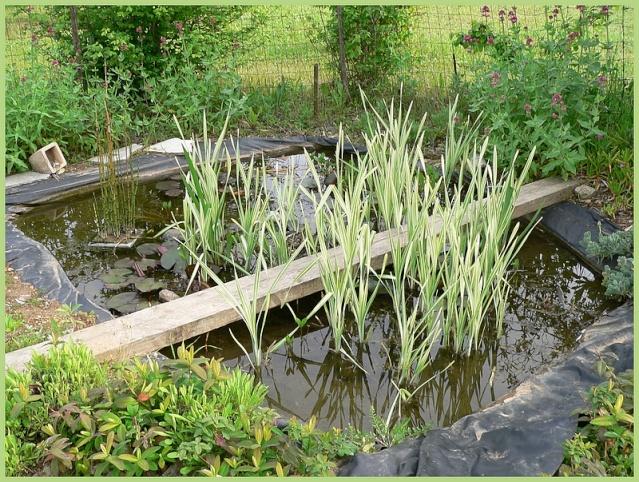 le bassin de Belle des Champs P1180710