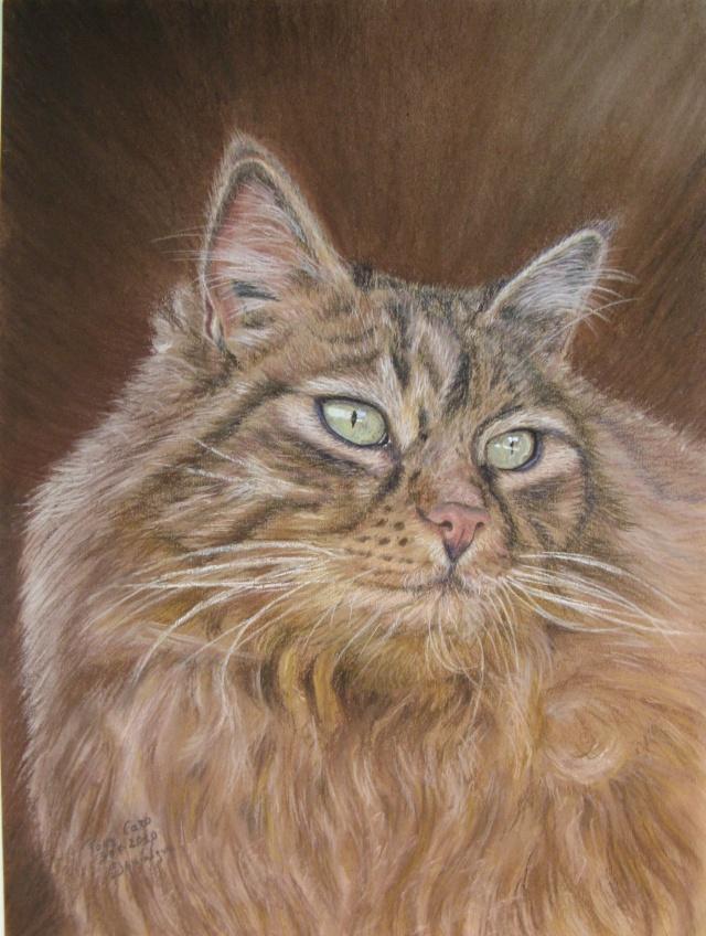 Nos animaux dessinés en pastels Gribou10