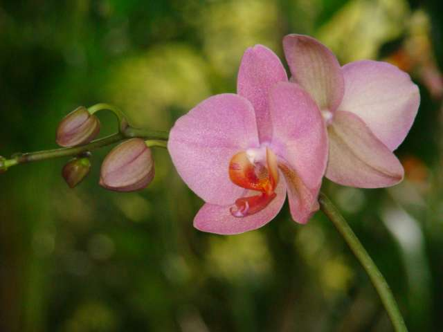 expo orchidees vergeze 2009 Dsc03127