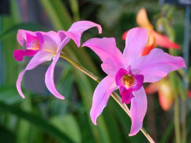 expo orchidees vergeze 2009 Dsc03131