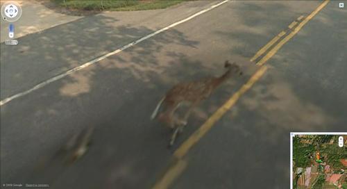 Bambi percuté par une Google car Google10