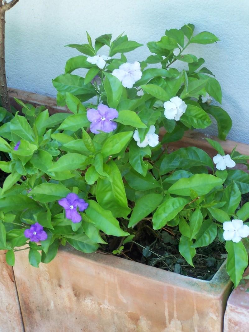 avec les beaux jours en quelques fleurs 104_4312