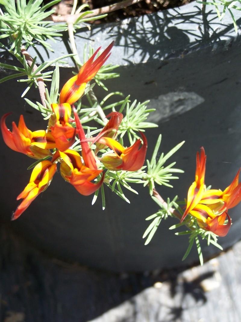 avec les beaux jours en quelques fleurs 104_4313