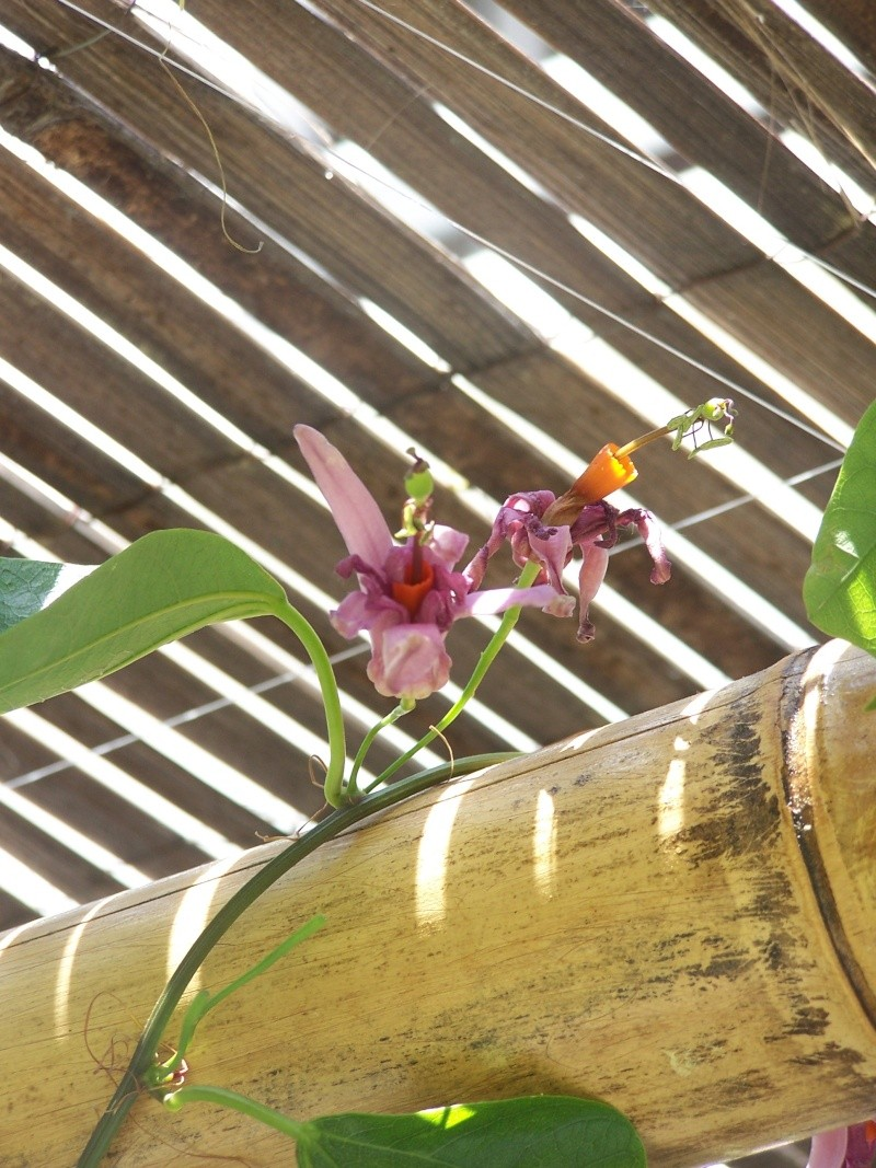avec les beaux jours en quelques fleurs 104_4322