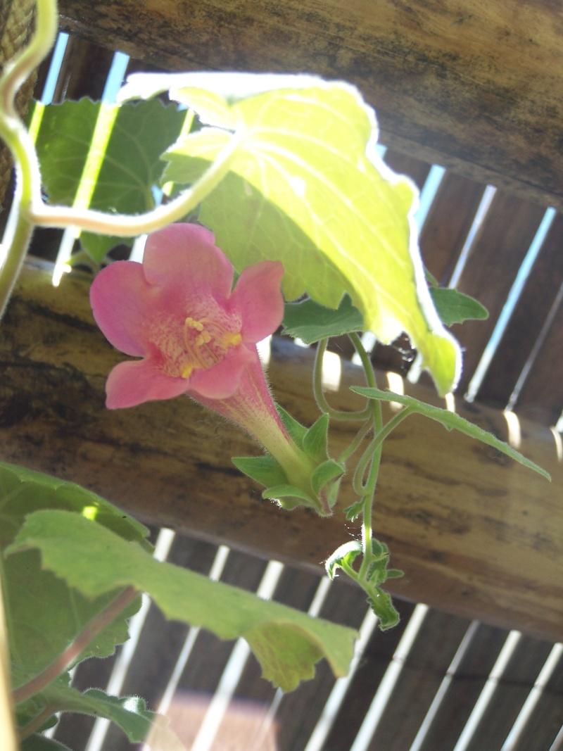 avec les beaux jours en quelques fleurs 104_4323