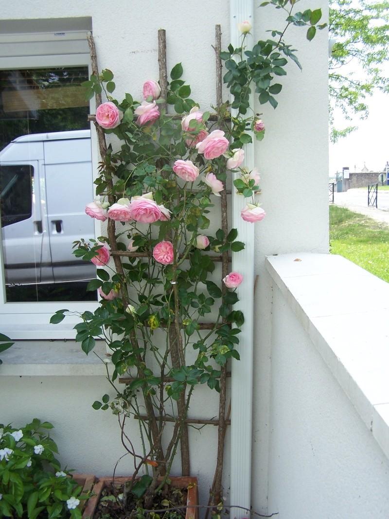 avec les beaux jours en quelques fleurs 104_4324