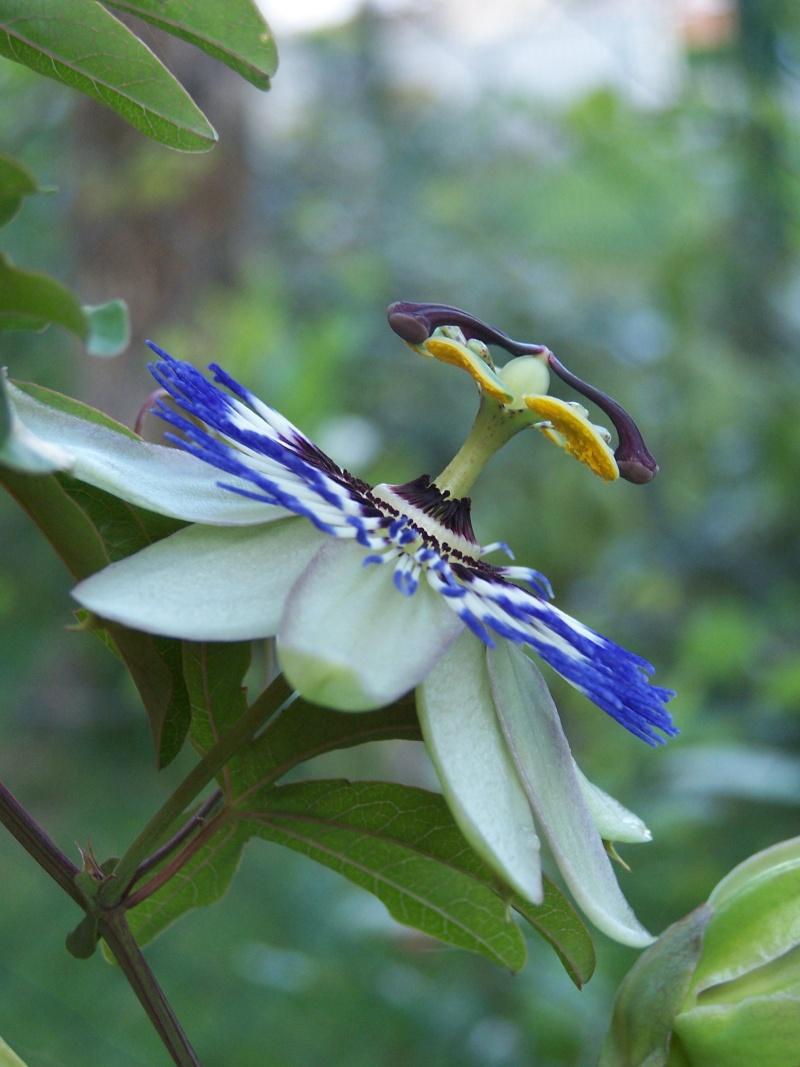 de nouvelles fleurs au jardin 104_4325