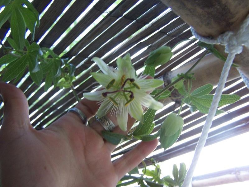 de nouvelles fleurs au jardin 104_4327