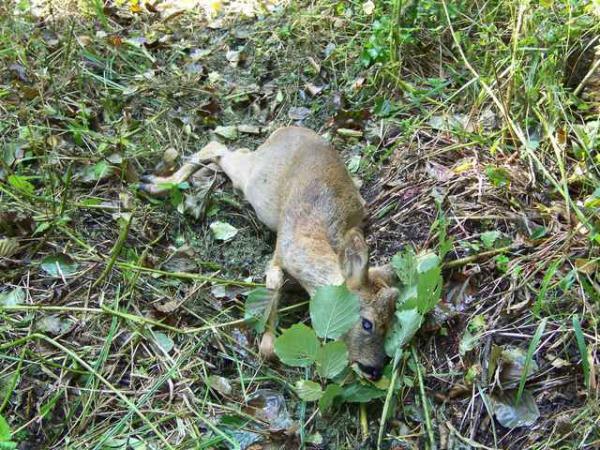 Mes sorties, Pirsch Affût  -  Saison de chasse 2010/2011 - Page 6 20539710