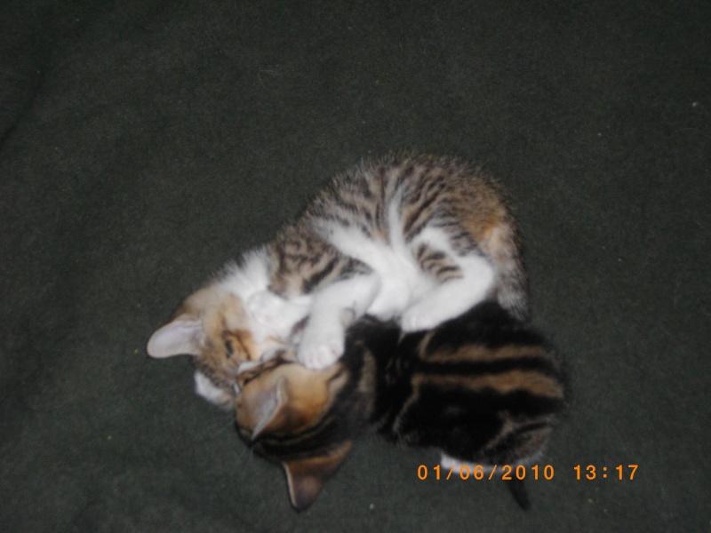 2 Chatons femelles 60 Imgp0110