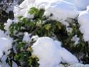 concours 12 paysages féériques d'hiver P1020313