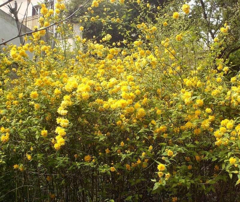 En fleurs! Hpim9012