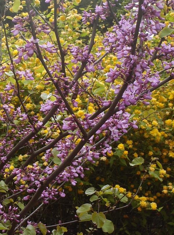 En fleurs! Hpim9314