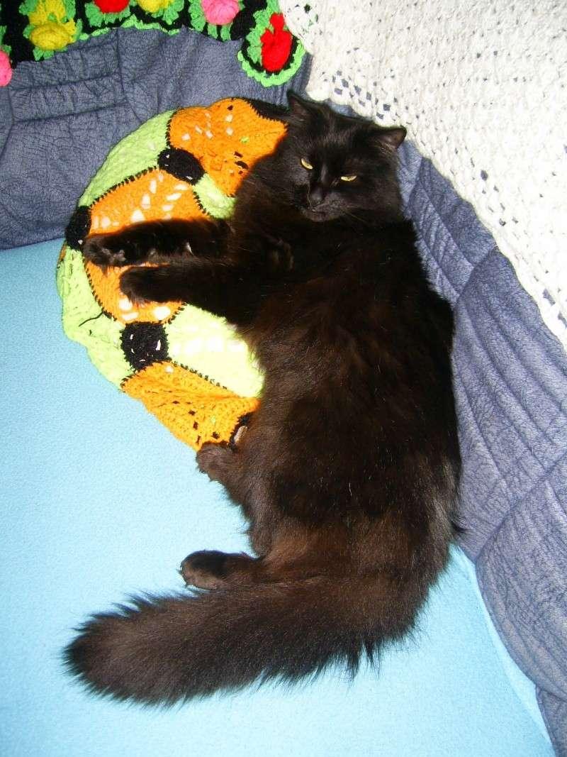 Loulou, angora turc noir - Page 2 Alala_10