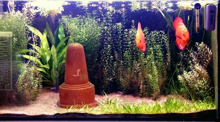 Démarrage de mon aquarium Valis_10