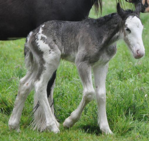 10 - 59 IC... Laurel à l écurie de Tine a eu son bébé Baba_l14