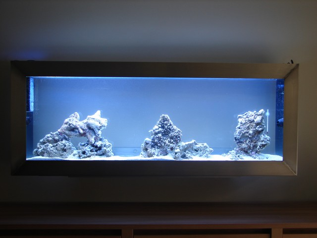 Lancement de mon premier aquarium marin - Page 4 00111
