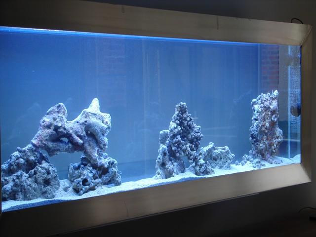 Lancement de mon premier aquarium marin - Page 4 00211