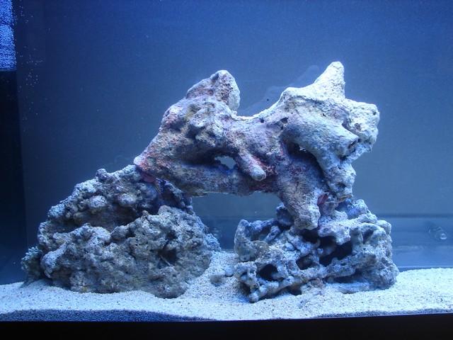 Lancement de mon premier aquarium marin - Page 4 00312