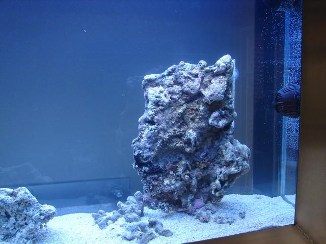 Lancement de mon premier aquarium marin - Page 4 00412