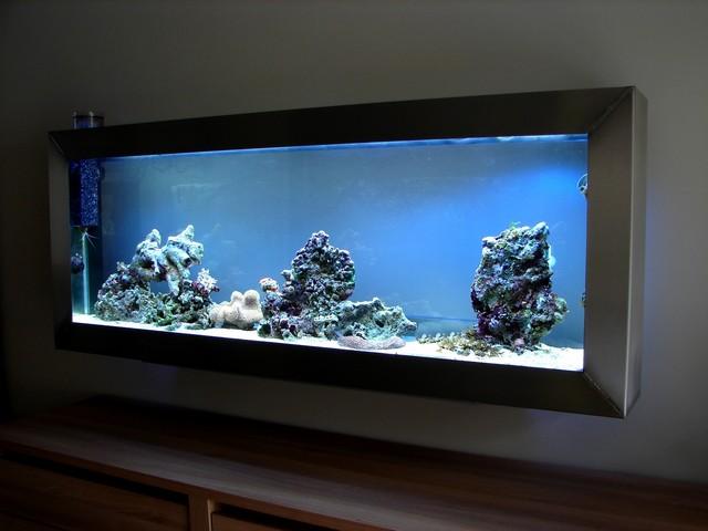 Lancement de mon premier aquarium marin - Page 5 00512