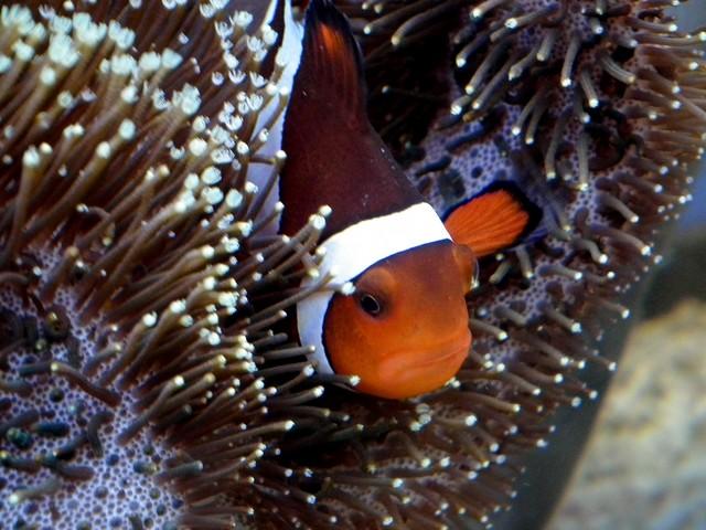 Lancement de mon premier aquarium marin - Page 8 Dscf0516