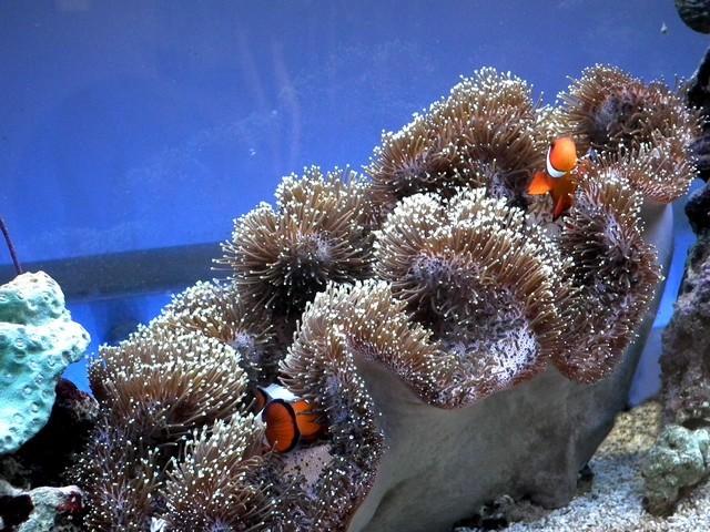 Lancement de mon premier aquarium marin - Page 8 Dscf0517