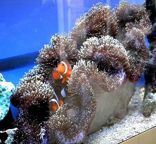 Lancement de mon premier aquarium marin - Page 8 Dscf0518