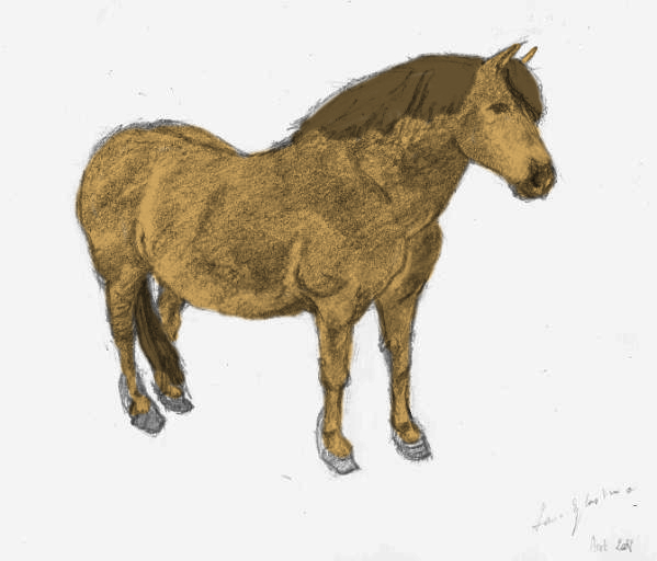 Colorisations Horse10