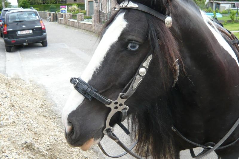 Heu...cheval carnivore???? 32411