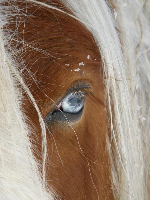Le pie-noir aux yeux bleus - Page 2 Drf_oe10