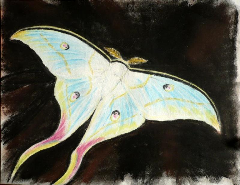 un papillon pour Sjoelie Papill10