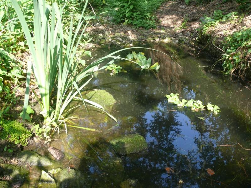 "Bassin ""naturel"" - Page 2 P1120414"