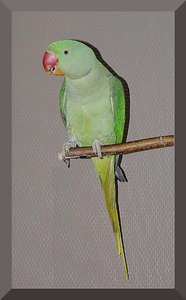 portrait de coco . P1050222