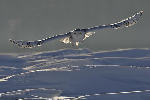 Le collier du Chamane Inuit 20_har10