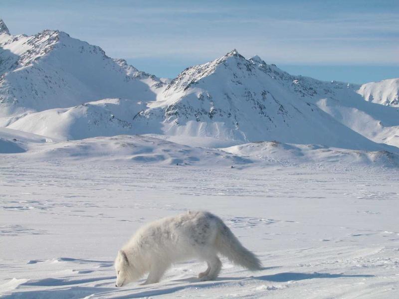 Le collier du Chamane Inuit Renard10