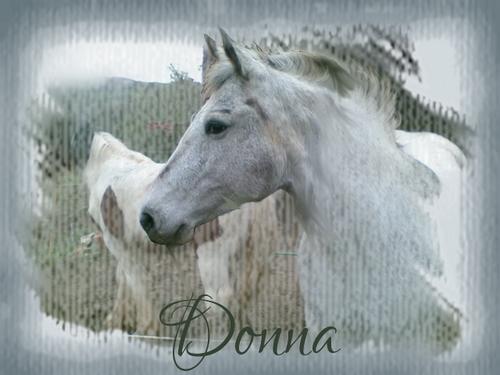 PhotoMasque (un an et demi plus tard) Donna110