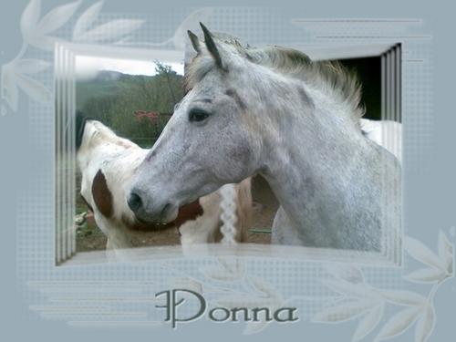 PhotoMasque (un an et demi plus tard) Donna410