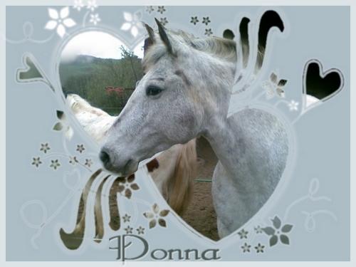 PhotoMasque (un an et demi plus tard) Donna510