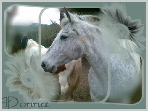 PhotoMasque (un an et demi plus tard) Donna511