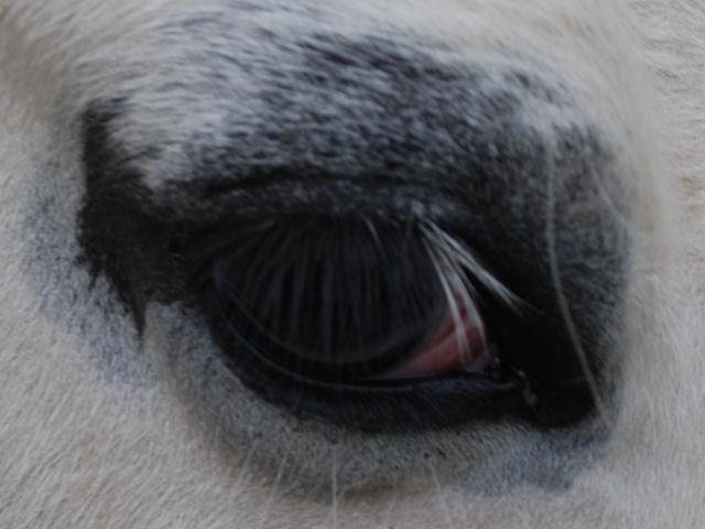 Le pie-noir aux yeux bleus - Page 3 Oeilri10