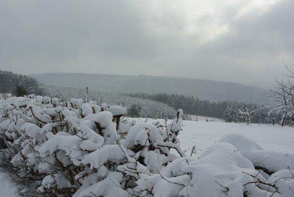 Ardennes Belges au mois de Janvier 19657_11