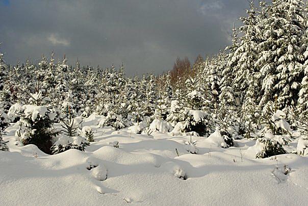 Ardennes Belges au mois de Janvier 19657_13