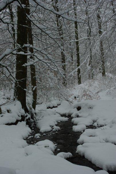 Ardennes Belges au mois de Janvier 19657_14