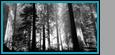 ° La Forêt °