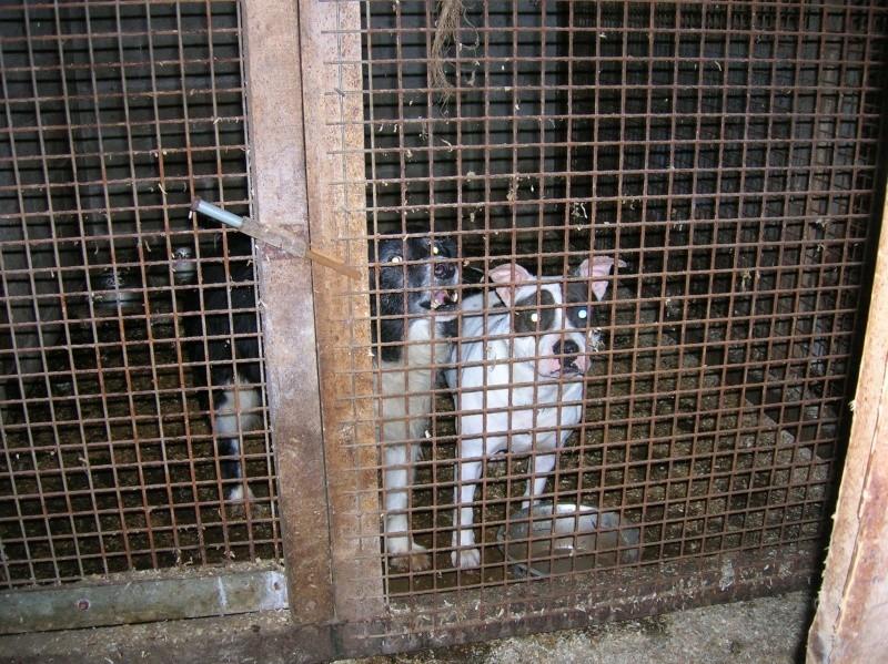 76 animaux saisis Border10