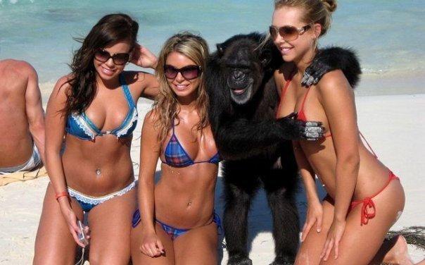 qui a dis que les singes ne sont pas eux aussi chanceux ?! 3010_110