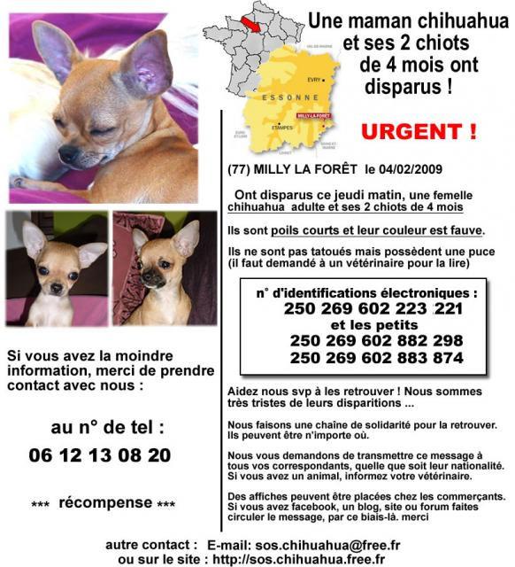 Vol de portée de chihuahua en region parisienne Affich10