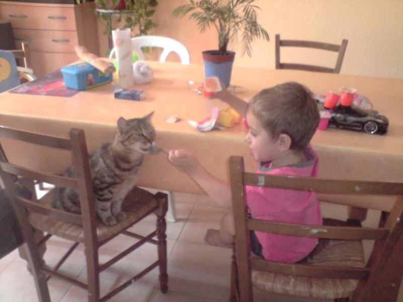 Mes mini tigres et mes longues oreilles!! P0908010